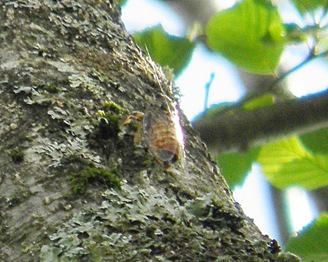 The Distinctive Sound of Japanese Cicadas Brings With the Feeling of Summer